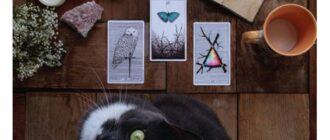 Гадания с помощью кошки