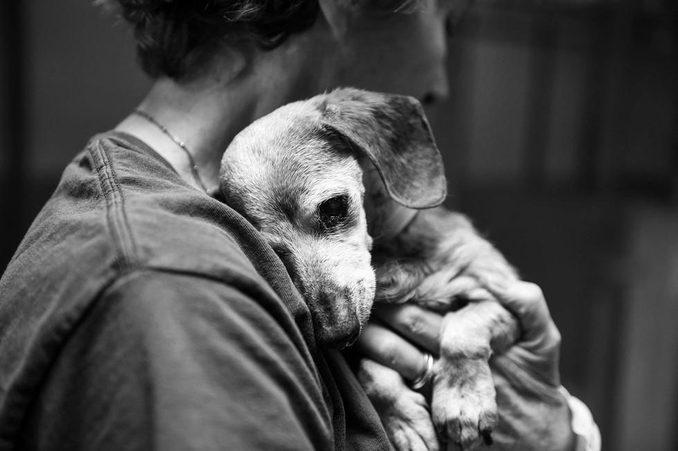 Почему прибилась собака Приметы и суеверия