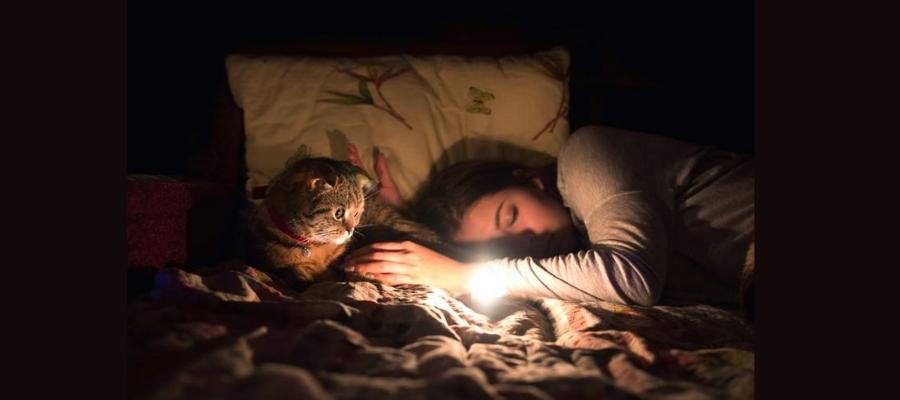 Если во сне потерялась собака