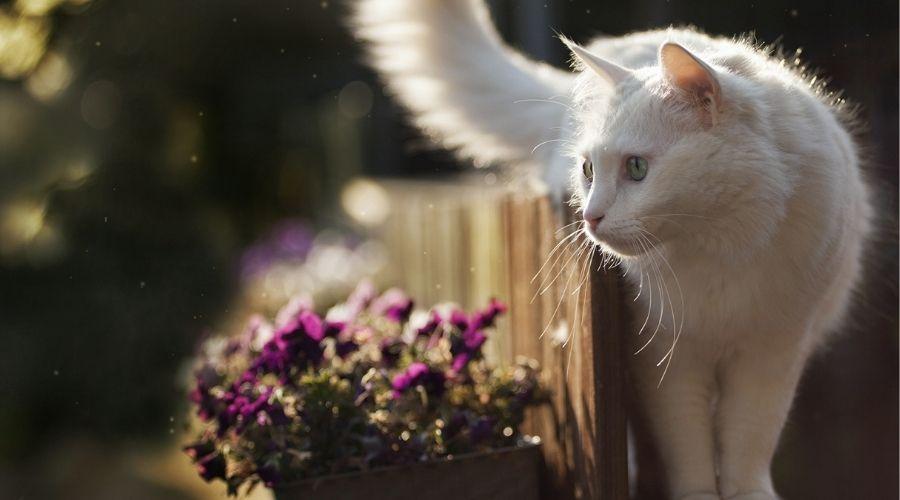 белые кошки целители