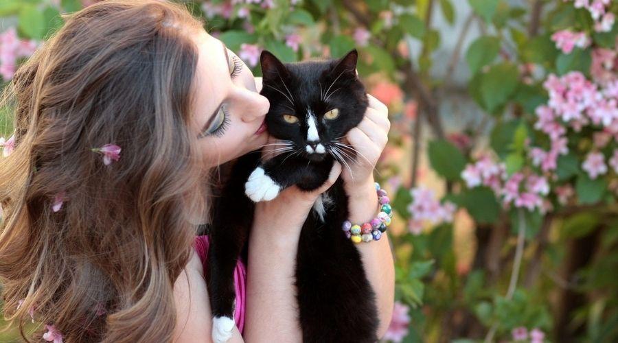 черно - белая кошка ведьма