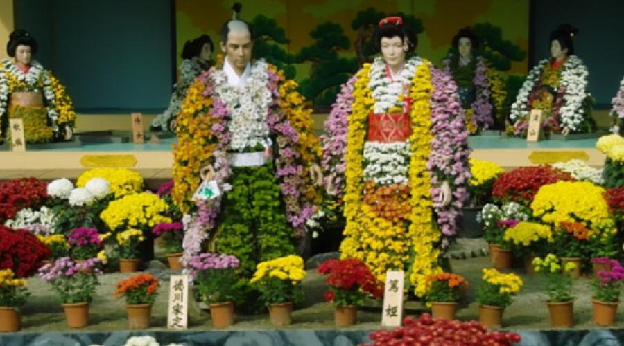 японский язык цветов - хризантема