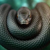 женский змеиный гороскоп