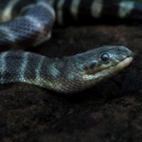 женщины змеи